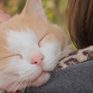 kot przytulający się do człowieka