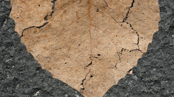 popękany-liść-brązowy-wysuszony